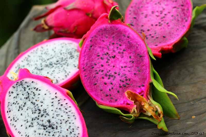 Dragon Fruit 5